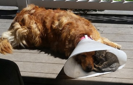 amicizia-cane-gatto-cover-700x448
