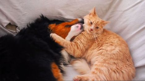 cane-e-gatto-amicizia-che-vi-scalderà-il-cuore