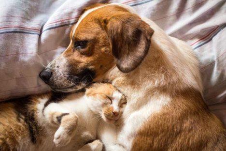 cane-gatto-dormono