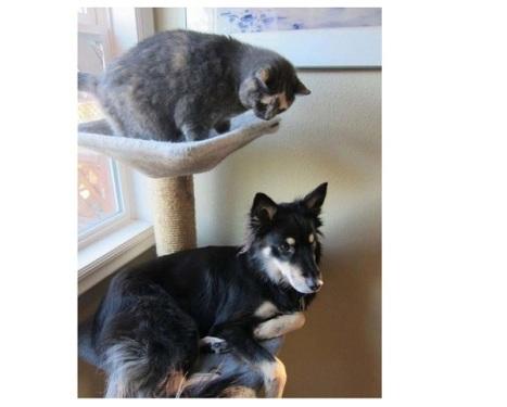 cane-gatto-giocano