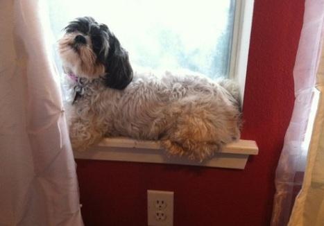 cane-seduto-finestra