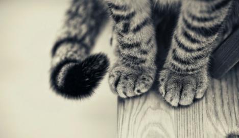 coda-gatto.jpeg