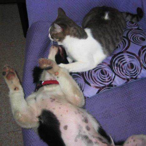 foto-cane-e-gatto-giocano