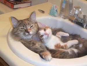 gatti buonanotte8