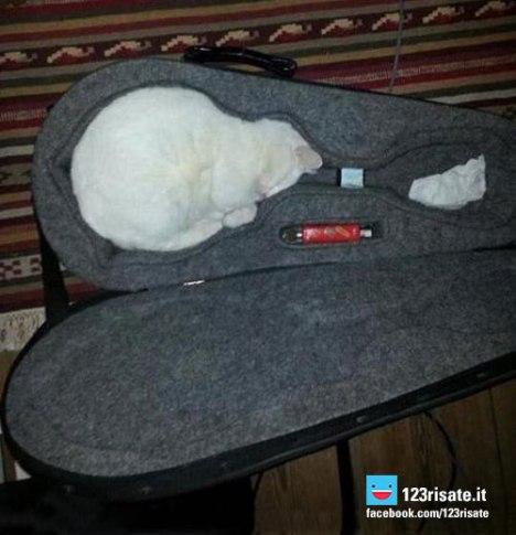 gatti-liquidi