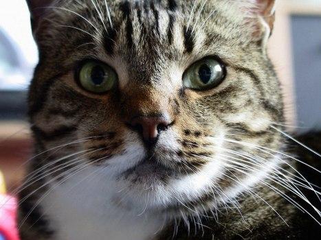 gatto-9.jpg