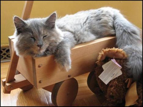 gatto che dorme in un carrellino.jpg
