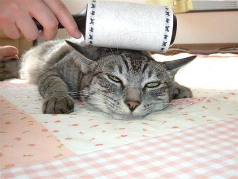 gatto che si fa pulire.jpg