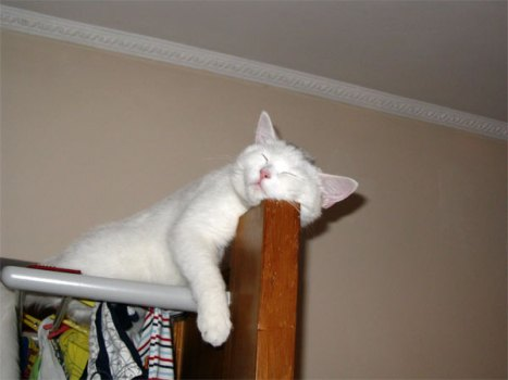 gatto comodo.jpg