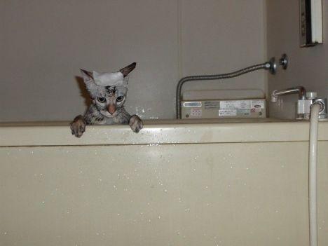 micio in vasca.jpg