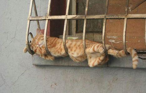 comodita e gatto.jpg