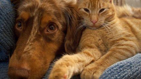 pensione-per-cani-e-gatti-gestire-il-ritorno