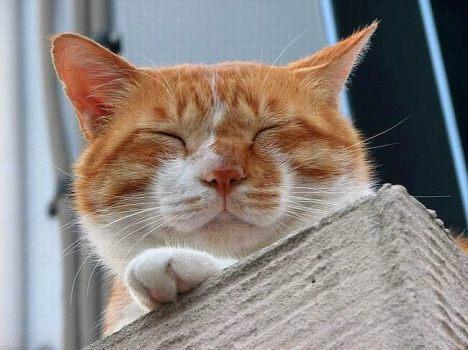 animals_naptime_004